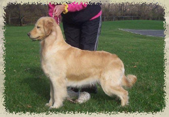windy_ridges_goldens_07-03-14008010.jpg